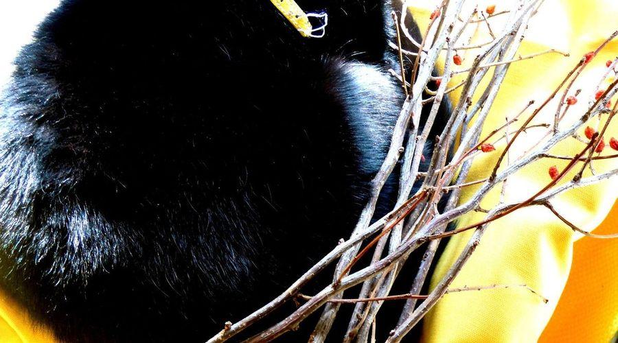 ميس أورتيليا بي آند بي-4 من 28 الصور