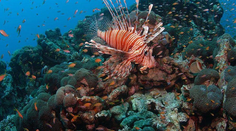 Hyatt Regency Sharm El Sheikh-13 of 32 photos