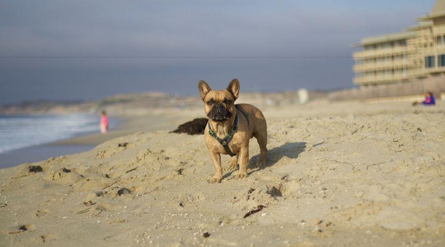 Monterey Tides-16 of 21 photos