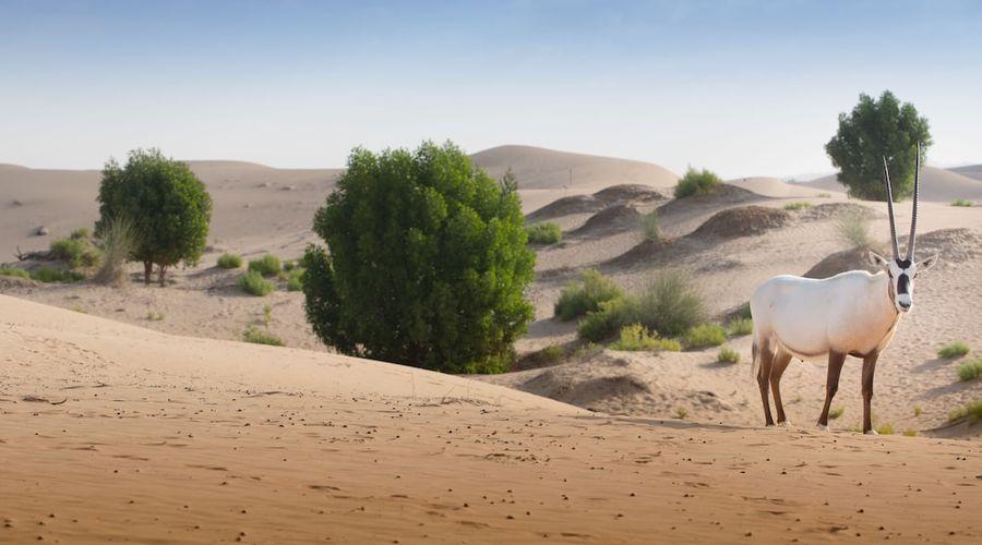 Telal Resort Al Ain-49 of 49 photos