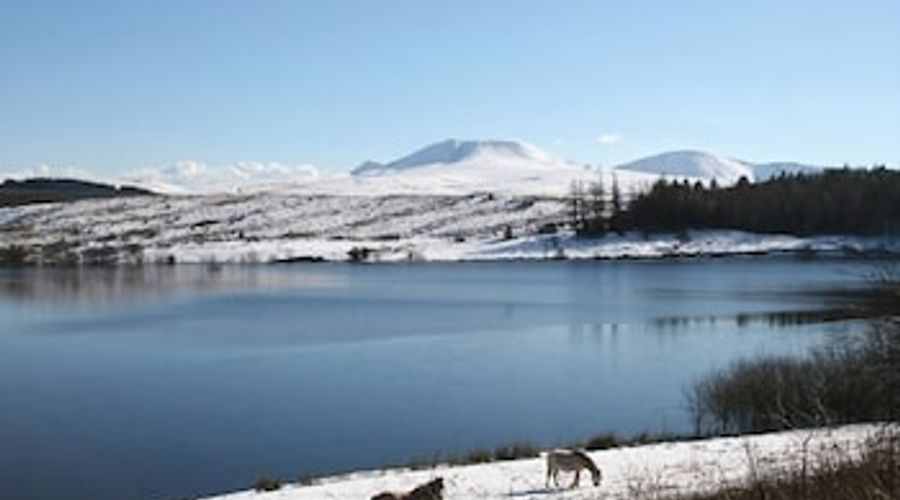 Bronfelin and Troed y Rhiw Holiday Cottages-17 of 21 photos