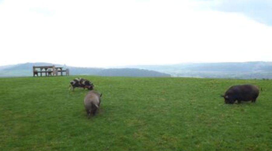 Lunnon Farm-11 of 14 photos