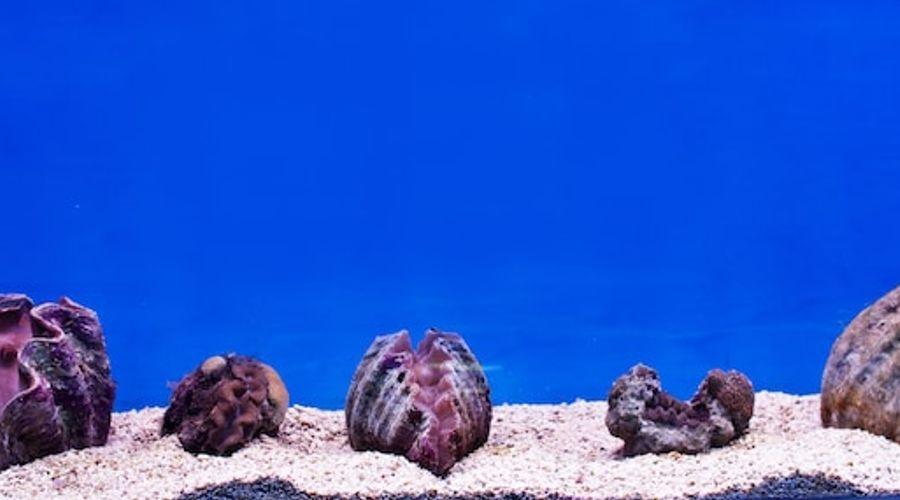 Gayana Marine Resort-54 of 71 photos