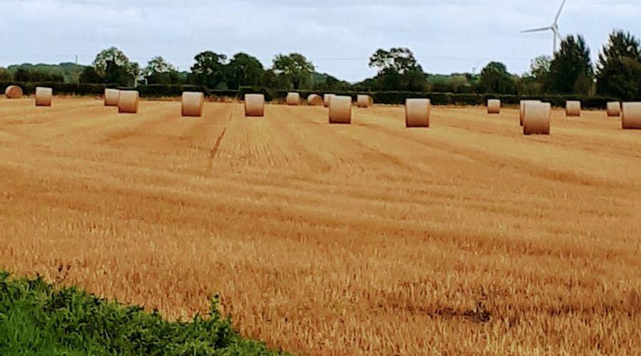 Field View B&B-37 of 52 photos