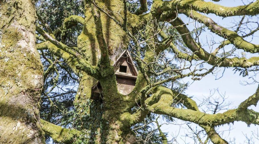 Corrafeckloch Forest Cottages-20 of 29 photos