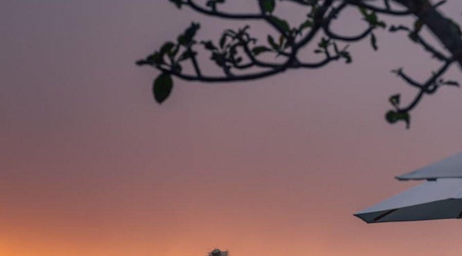 موندوك مودنج بلانتيشن-56 من 139 الصور
