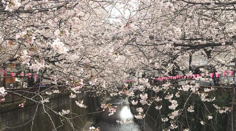 هوتل ترستي طوكيو بايسايد-19 من 26 الصور
