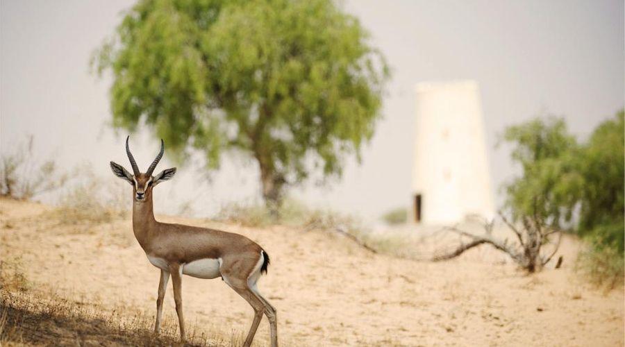 ريتز كارلتون رأس الخيمة، صحراء الوادي -4 من 42 الصور