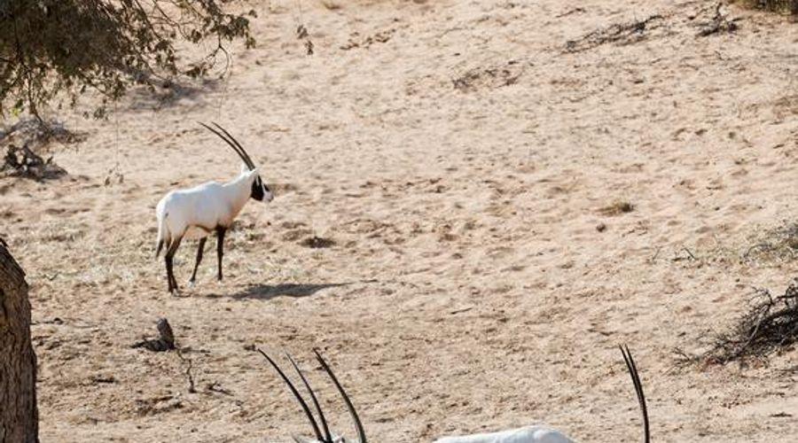 ريتز كارلتون رأس الخيمة، صحراء الوادي -5 من 42 الصور