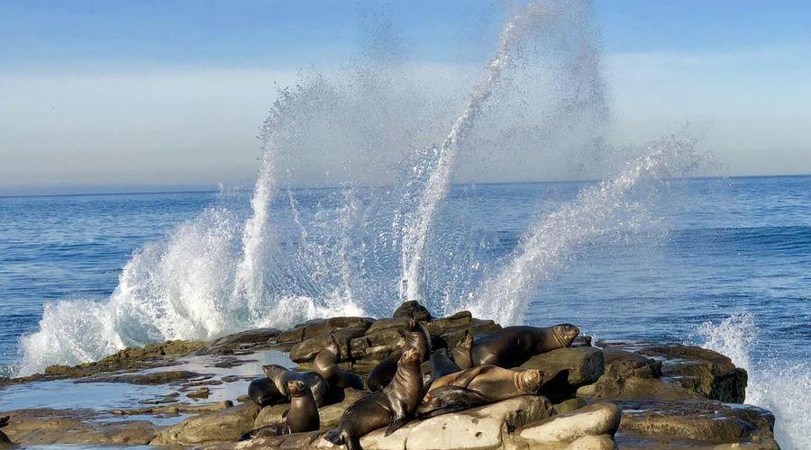 Four Points by Sheraton San Diego - SeaWorld-46 of 46 photos