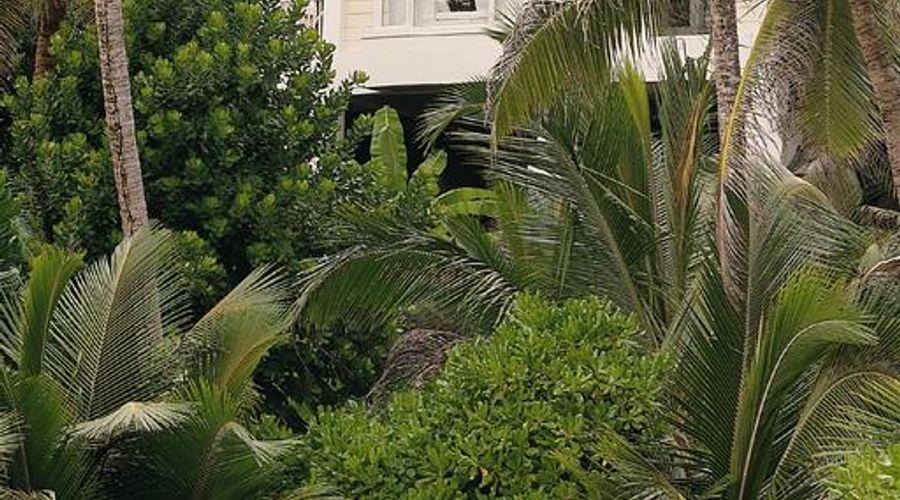 بانيان تري سيشل-1 من 43 الصور