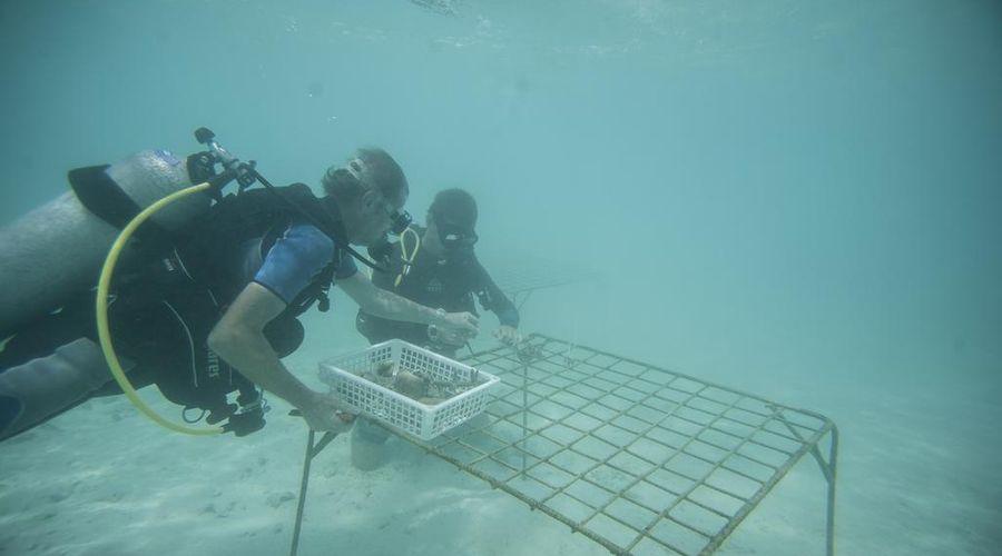 Taj Coral Reef Resort & Spa Maldives-27 of 34 photos