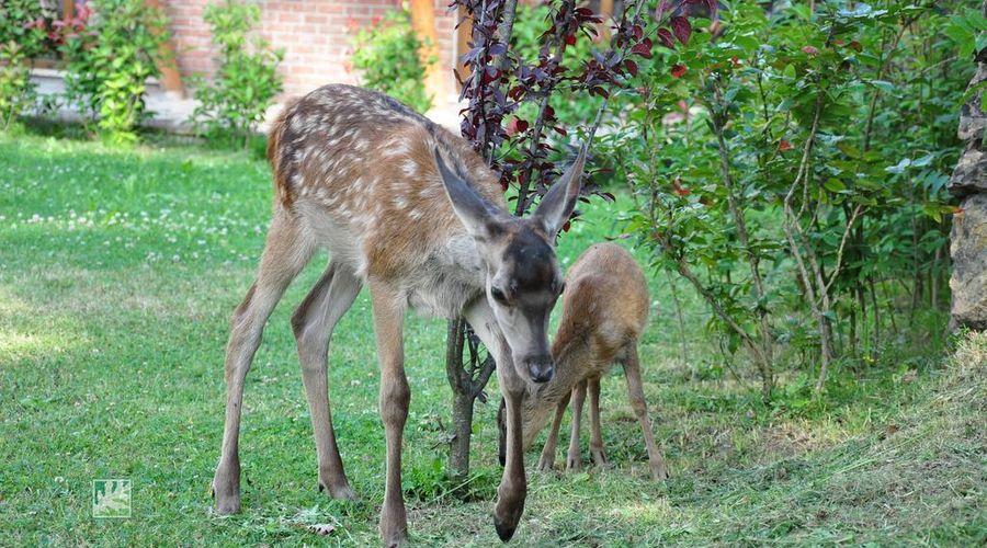 Gazelle Resort & Spa-19 of 32 photos