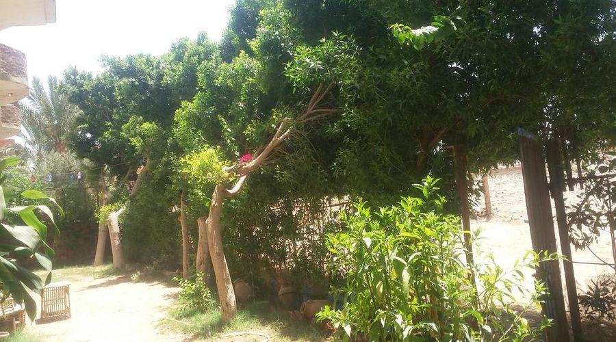 سقارة فيو جست هاوس-8 من 47 الصور