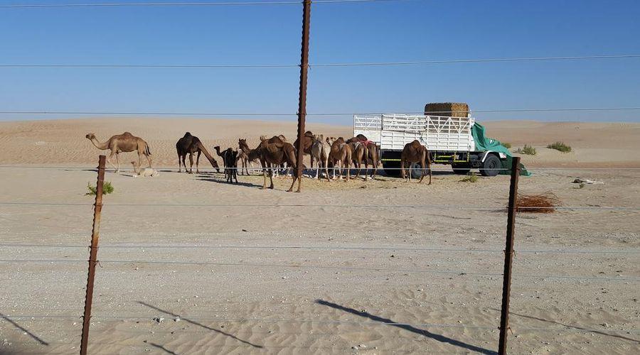 Western Hotel - Madinat Zayed-44 of 44 photos