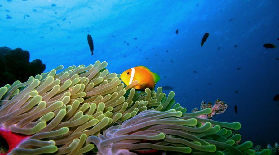 Anantara Dhigu Maldives Resort-9 of 45 photos